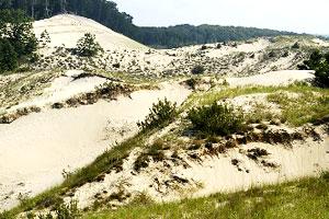 Beach Shade Canopy