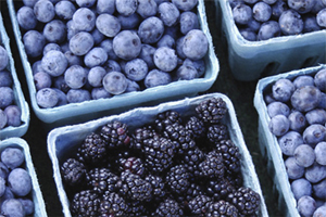 Blueberries harvested in Ottawa County.