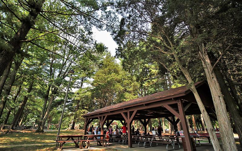 Grose Park Forest Shelter